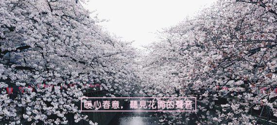 日月光國際家飾館│東京x目黑川x櫻花、953x943